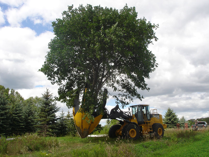 Dutchman_95_Tree_Spade_on_Loader.jpg